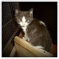 Adopt A Pet :: RYLEE - Medford, WI