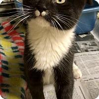 Adopt A Pet :: Borris - Island Park, NY