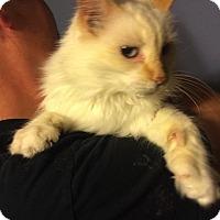 Adopt A Pet :: Fiona - Baltimore, MD