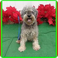Adopt A Pet :: YAP - Marietta, GA