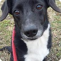 Adopt A Pet :: PETE - Wintersville, OH