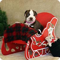 Adopt A Pet :: Sabrina - Waldorf, MD