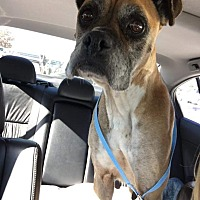 Adopt A Pet :: Georgia - Austin, TX