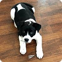 Adopt A Pet :: Mito - Durham, NC