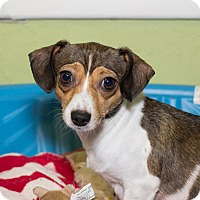 Adopt A Pet :: Missy - Grand Rapids, MI