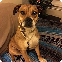 Adopt A Pet :: Sasha - Mount Laurel, NJ