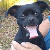 Adopt A Pet :: Jetta/MS - Columbia, TN