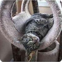Adopt A Pet :: Noelle - Jenkintown, PA