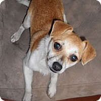 Adopt A Pet :: Luigi - Austin, AR