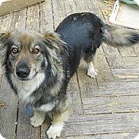 Adopt A Pet :: ABIGAIL - Raleigh, NC