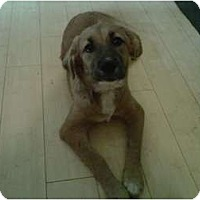 Adopt A Pet :: Teddy - Newcastle, OK