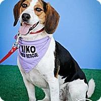 Adopt A Pet :: Teega - Rigaud, QC