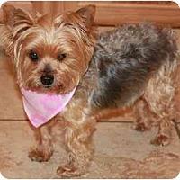 Adopt A Pet :: Sassy - Gilbert, AZ