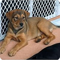 Adopt A Pet :: Autumn - Minneola, FL