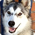 Adopt A Pet :: TASHA (video)