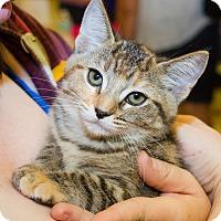 Adopt A Pet :: Devin - Irvine, CA