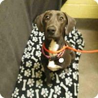 Adopt A Pet :: *AUSTIN - Upper Marlboro, MD