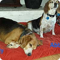 Adopt A Pet :: Abby & Jody-BONDED PAIR - Portland, OR