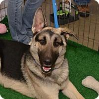 Adopt A Pet :: Jack - Vacaville, CA