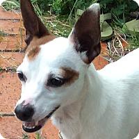 Adopt A Pet :: Jacky Girl - San Francisco, CA