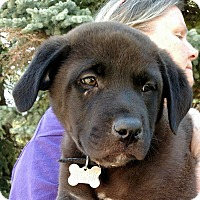 Adopt A Pet :: Henry - Detroit, MI