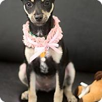 Adopt A Pet :: Fanny - Dalton, GA
