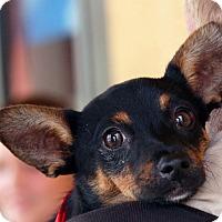 Adopt A Pet :: Leia - Palmdale, CA