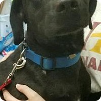 Adopt A Pet :: Bobo - Ottumwa, IA