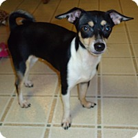 Adopt A Pet :: Minnie - Toledo, OH