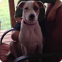 Adopt A Pet :: Sophia - Southbury, CT