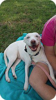 Husky/Labrador Retriever Mix Dog for adoption in Wichita Falls, Texas - Helen