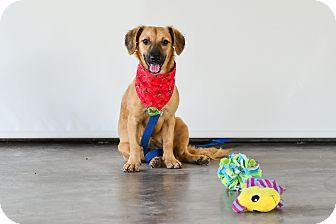Labrador Retriever Mix Dog for adoption in Victoria, British Columbia - Sandy