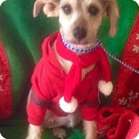 Adopt A Pet :: BONNIE - Santa Monica, CA