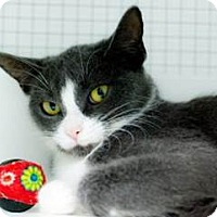 Adopt A Pet :: Beth - Belleville, MI