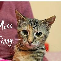 Adopt A Pet :: Miss Figgy - Wichita Falls, TX