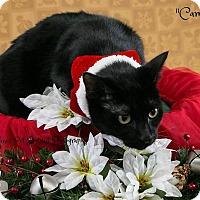Adopt A Pet :: Camissa - Davison, MI