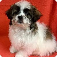 Adopt A Pet :: Moxy - La Verne, CA