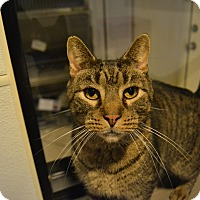 Adopt A Pet :: Tanyon - Broadway, NJ