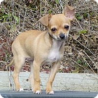 Adopt A Pet :: Honey  Adopted - Nine Mile Falls, WA