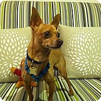 Adopt A Pet :: Jalapeno - Rockaway, NJ
