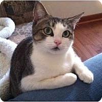 Adopt A Pet :: Bobbi Manx - McDonough, GA