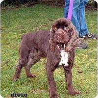 Adopt A Pet :: Rufeo - Tacoma, WA
