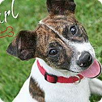 Adopt A Pet :: Earl - Brazil, IN