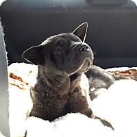 Adopt A Pet :: Cocoa - TX foster to adopt - Mira Loma, CA