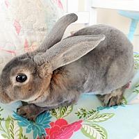 Adopt A Pet :: Happy - Hillside, NJ