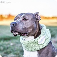 Adopt A Pet :: Darla - Southampton, PA