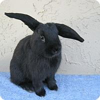 Adopt A Pet :: Clarence - Bonita, CA