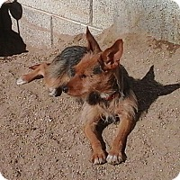 Adopt A Pet :: Chelsea the LoveBug - Phoenix, AZ