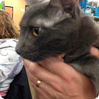 Adopt A Pet :: Mike - San Ramon, CA