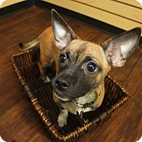 Adopt A Pet :: Hazelnut - Detroit, MI